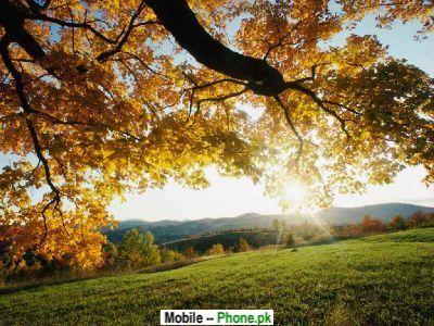 autumn_leaves_others_mobile_wallpaper.jpg