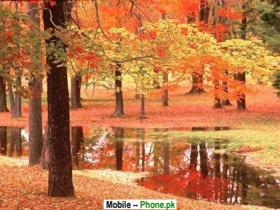 wallpaper nature autumn. Autumn Tree Nature View