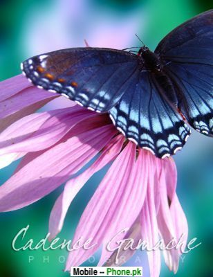 wallpaper blue butterfly. Beautiful lue butterflies