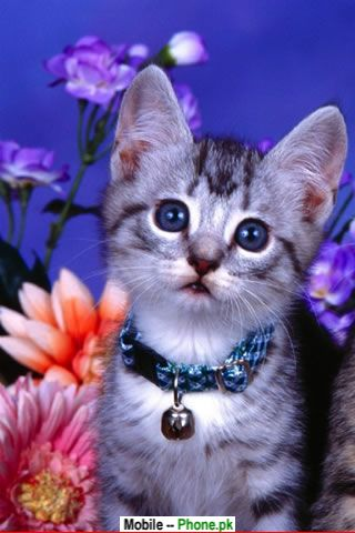 Mobile Wallpaper Images on Beautiful Cat Animals Mobile Wallpaper Jpg