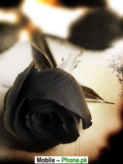 black_rose_nature_mobile_wallpaper.jpg