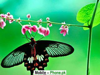 butterfly_on_rose_320x240_mobile_wallpaper.jpg