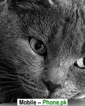 cat_face_animals_mobile_wallpaper.jpg