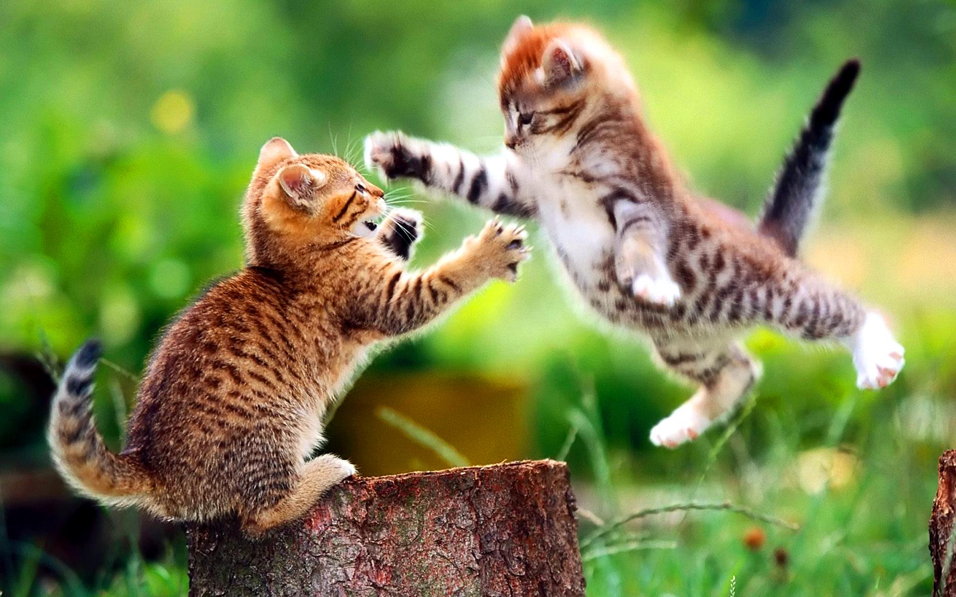cat_fighting_animals_mobile_wallpaper.jpg