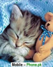 cat_sleeping_with_bear_animals_mobile_wallpaper.jpg