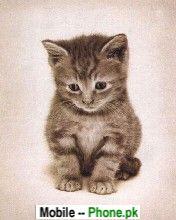 cute_cat_wallpaper_pics_animals_mobile_wallpaper.jpg