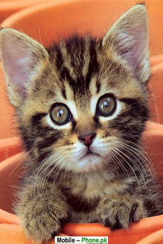 Cutepuppies  Kittens Wallpaper on Full Size   More Cute Cats And Kittens Wallpaper For Mobile