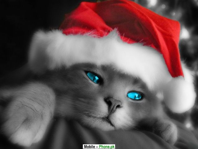 cute wallpapers for mobile phones. Cute Christmas Cat Wallpaper