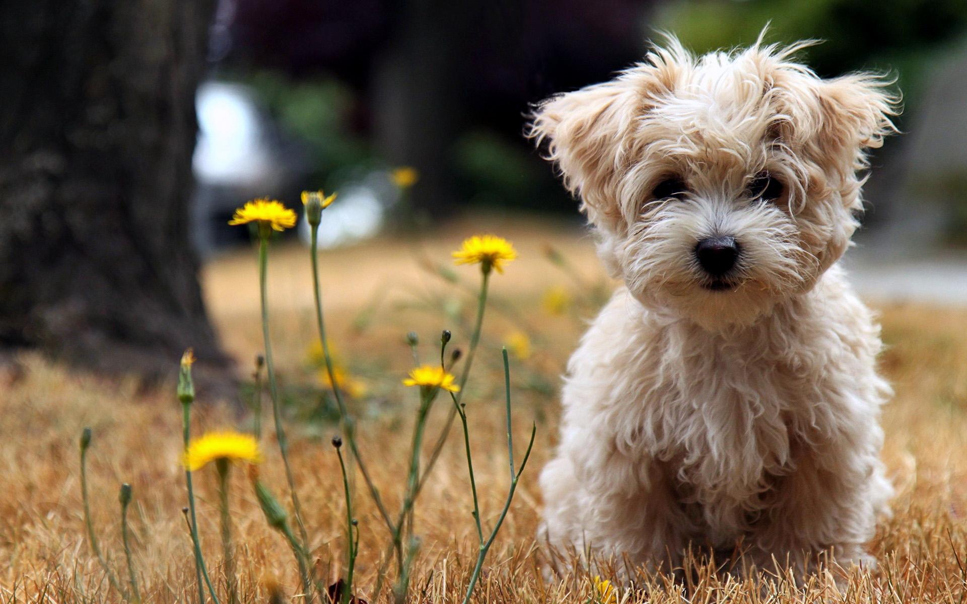 cute_dog_animals_mobile_wallpaper.jpg