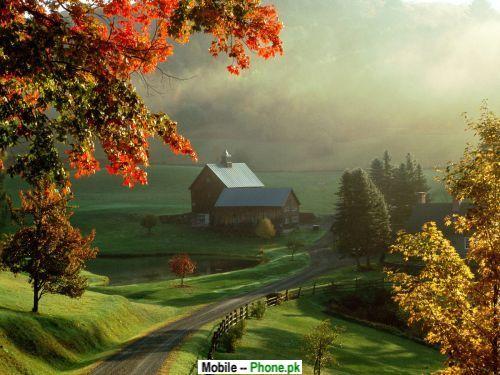 cute_scenery_nature_mobile_wallpaper.jpg