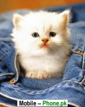 Cute White Cat Wallpapers Mobile Pics