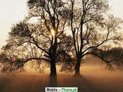 evening_tree_pictures_nature_mobile_wallpaper.jpg