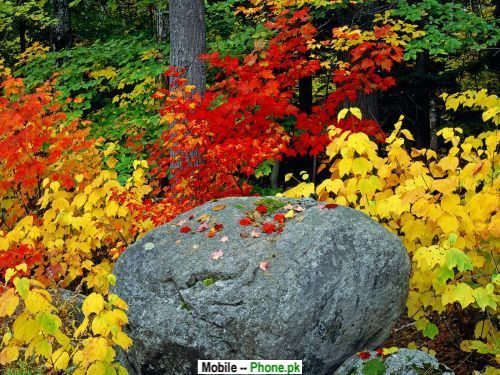 flower_background_images_nature_mobile_wallpaper.jpg