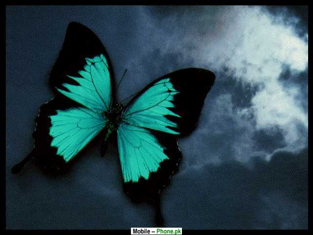 Green & Black Butterfly Wallpapers Mobile Pics