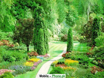 Green Garden: Green Garden Wallpaper
