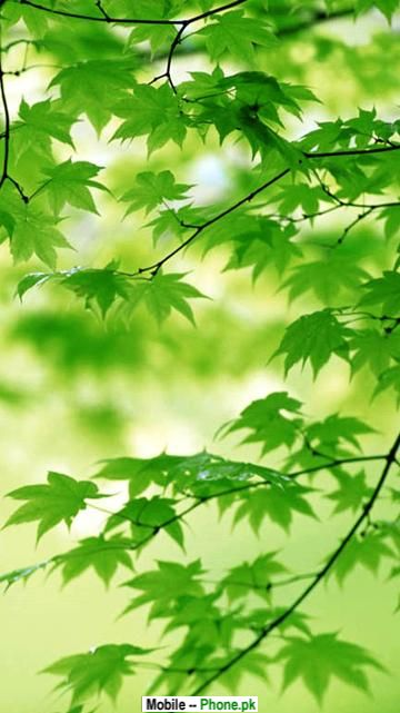 green_leaf_wallpaper_nature_mobile_wallpaper.jpg