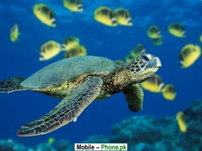 wallpapers sea. wallpaper sea turtle.