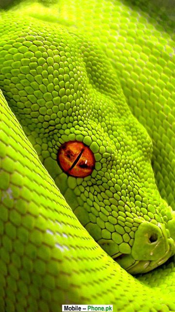 green_snake_picture_animals_mobile_wallpaper.png