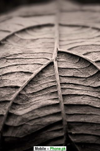 old_leaf_nature_mobile_wallpaper.jpg