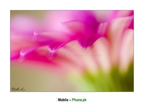pink_lily_flower_nature_mobile_wallpaper.jpg
