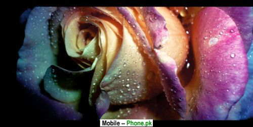 pink_roses_background_nature_mobile_wallpaper.jpg