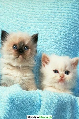 Cutepuppies  Kittens Wallpaper on Cute Puppies And Kittens Wallpaper  Really Cute Cats And Kittens