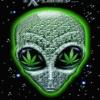 alien face Nature 176x220