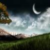 Awsome Nature Scen T-Mobile 640x480