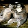 baby monkey pictures Animals 320x480