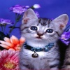 beautiful cat Animals 320x480