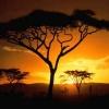 Beautiful Sunset Tree Nature 176x220