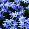 blue flower background pics Nature 176x220