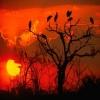 Botswana Sunset Others 400x300
