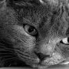 Cat Face Animals 176x220