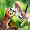 Cat fighting Animals 1920 x 12