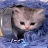 cat in jug Animals 176x220