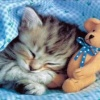 cat sleeping with Bear Animals 176x220