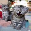 Cat Smile Animals 176x220
