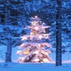 christmas tree picture HD 360x640