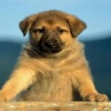 cute baby dog Animals 176x220