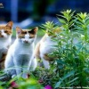 cute cat anime Animals 176x220