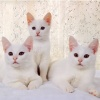 cute cat pictures Animals 320x480