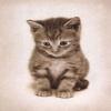 cute cat wallpaper Pics Animals 176x220