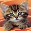 cute cats and kittens Animals 320x480
