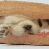 cute puppy sleeping Pic Animals 176x220