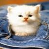 cute white cat Animals 176x220