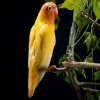Cute Yellow Parrot Others 400x300
