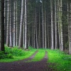 forest road Nature 320x480