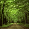 forest road picture Nature 360x640