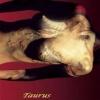 funny goat Animals 176x220